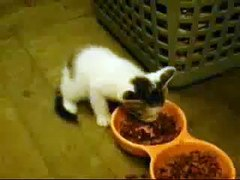 Uma Uma kitty