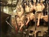 Prilog uvoz GMO piletinei i gostovanje Sase Draginog u Vestima B92