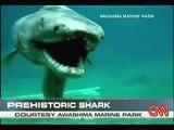 Un requin préhistorique - Découverte