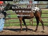 RF Allegro - 8/6/14  Appaloosa Sport Horse Gelding - For Sale