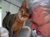 Abby Cat Love ..Don't Believe That Cats Are Not Affectionate abby abysinnian abbysinian love jo-an torres