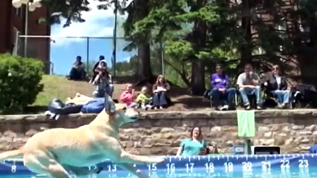 Dog Dock Diving Deadwood South Dakota Event Review