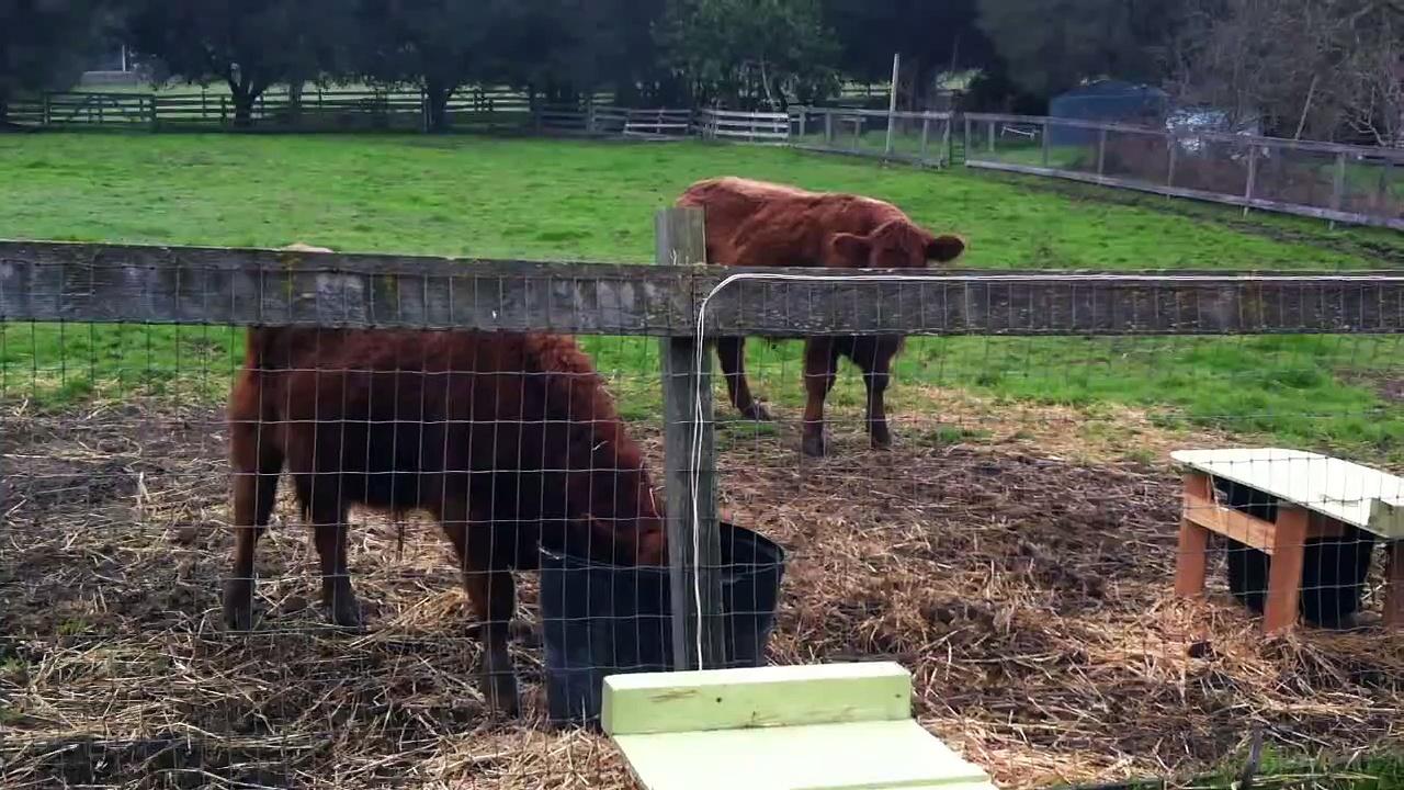 Automatic livestock feeder