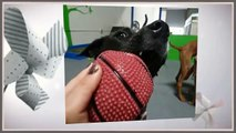 FUN TIMES @ BARKA LOUNGE Indoor Dog Park, Doggie DayCare, Cageless Dog Boarding, Dog Grooming