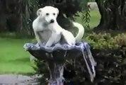 Komik Köpek Video Komik Köpek Kedi Kuş Papağan Ördek Eşek Fare Hayvanlar İzle