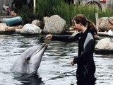 Dolfinarium    Dichter bij de dolfijnen