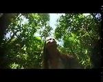 Turismo en Colombia: Leticia (Amazonas)