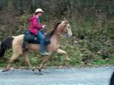 3 year old Champagne Singlefooting Gelding SOLD