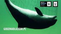 Godzina dla Ziemi WWF - Godzina dla morświna