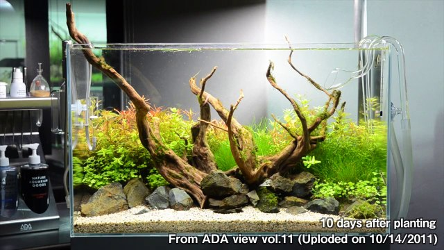 [ADA view 331] Follow-up video of NA Gallery aquariums. 60cm(17)