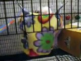 Fun baby rats