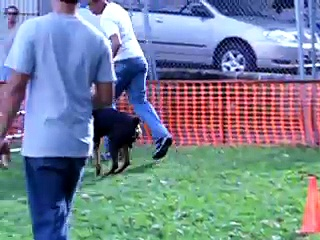 Flojo Rottweiler Agility 3