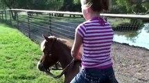 Sweet Tea - Great riding pony - Barrel Horses For Sale at Gold Buckle Barrel Horses