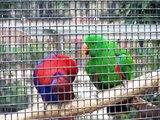coloured birds shagging