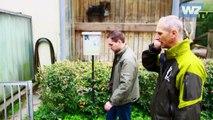 WZ-TV: Visite im Zoo (2): Riesenaufgaben und Mini-Schweine