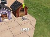Pets Pets Pets Pets!!!