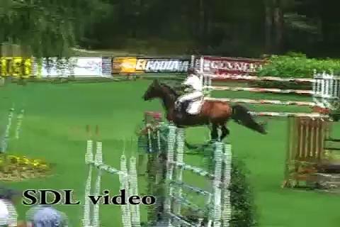 Horses- Forever