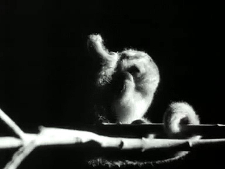 Surinaamse nachtdieren (1959)