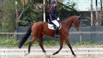 Una ragazza e il suo cavallo ♥
