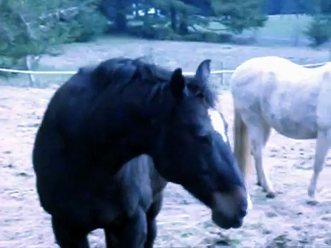 Horses Being  Horses  (2)