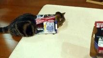 Maru le chat et ses cartons
