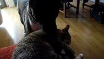 Ma chienne Akira (un Akita américain) et ma chatte Buzy