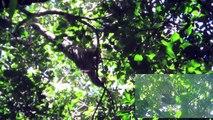 Costa Rica día 7: Monos y mapaches en acción! Parque Nacional Manuel Antonio