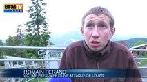 Alpes-de-Haute-Provence: encerclés par des loups