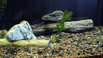 How to Properly Prepare Driftwood For Your Aquarium