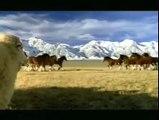 Budweiser Clydesdale Streaker Super Bowl XL Commercial