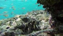 Underwater Maldives:  diving paradise