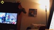 14   FUNNY VIDEOS   Funny Cats   Funny Cat Videos   Funny Animals   Fail Compilation   Cats Fails