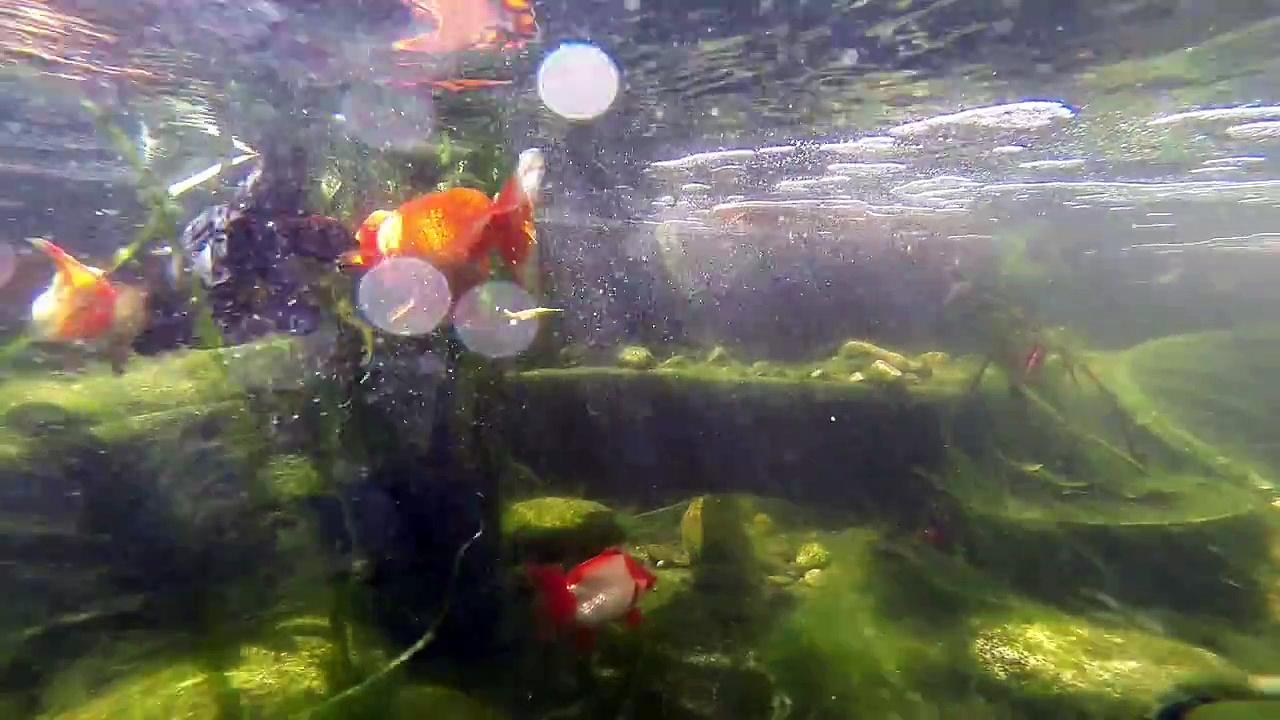 gopro pond