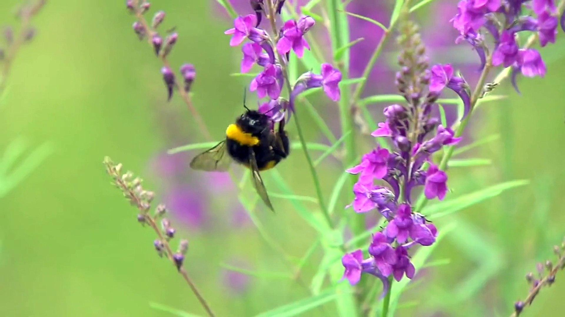 Wildlife - Bees