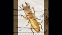 Best Best Termite Control Company Sydney Potts Point, Australia