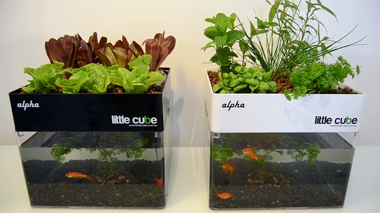 Best little aquaponics system for your home 1 – Little Cube Alpha