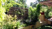 Une terrasse urbaine qui laisse s'exprimer la nature