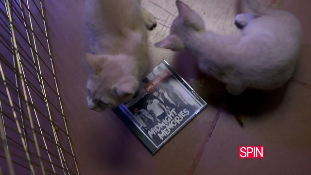 "One Direction ""Midnight Memories"" + Kittens (The Spin Review)"