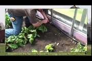 How to Install Netafim Field Drip Irrigation System by FarmTek
