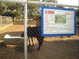 Un parc animalier sans animaux