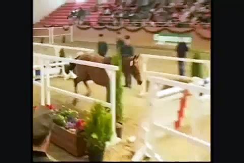 Clumsy- Horses