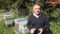 """Apiculture. Cinq ruches pour produire le """"Miel de Vannes"""""""