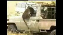 10 Worst Wildlife Attacks 2014