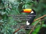 1 Aprende a bailar con Rumba Sabor y Conga, merengue, Franklin Vargas