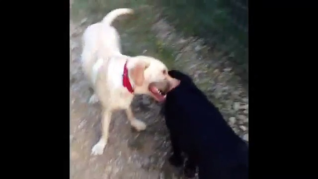 Barking Mad Morning Dog Walk Adventure