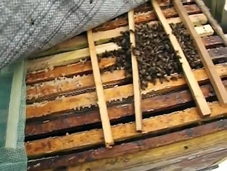 можно ли осматривать пчел зимой и зачем это делать
