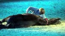 Sandra und Uwe Jourdain mit Balou und Massai auf der Hund und Pferd in Dortmund