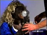 Animal Abuse!!  Bobby Berosini torturing, beating orangutans