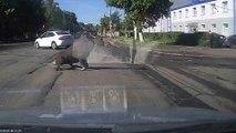 Un élan saute au dessus d'une voiture : dingue!
