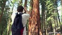 Caldo e siccità, a rischio le bellezze naturale di Yosemite Park